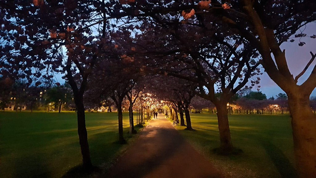 Evening in the Meadows