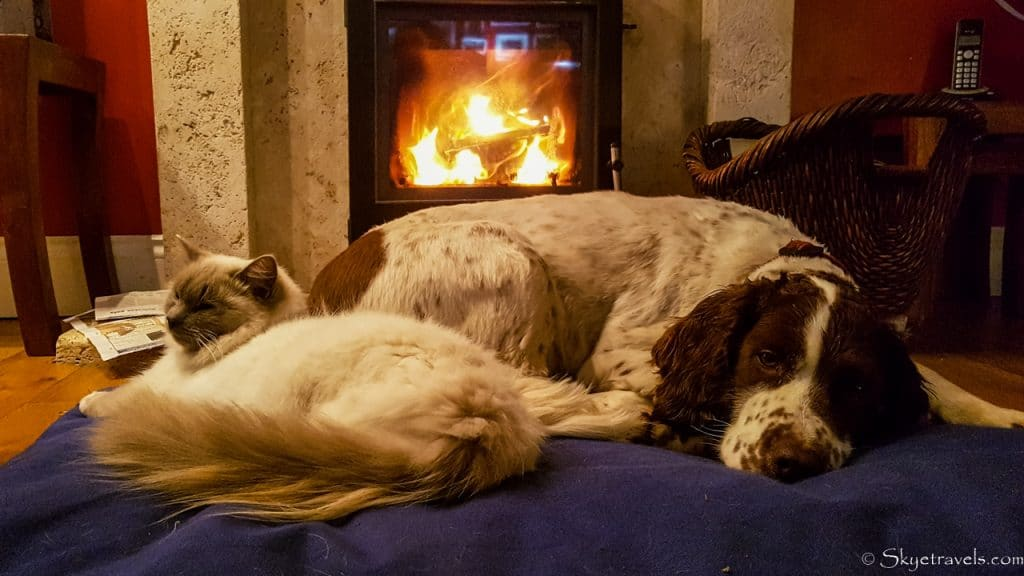 Pets at House Sit on the Isle of Skye