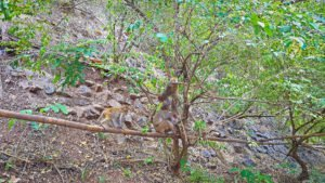 Monkeys at Muang On Cave