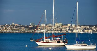 Private Boat Tours in San Diego Are More than Just Whale Watching 5