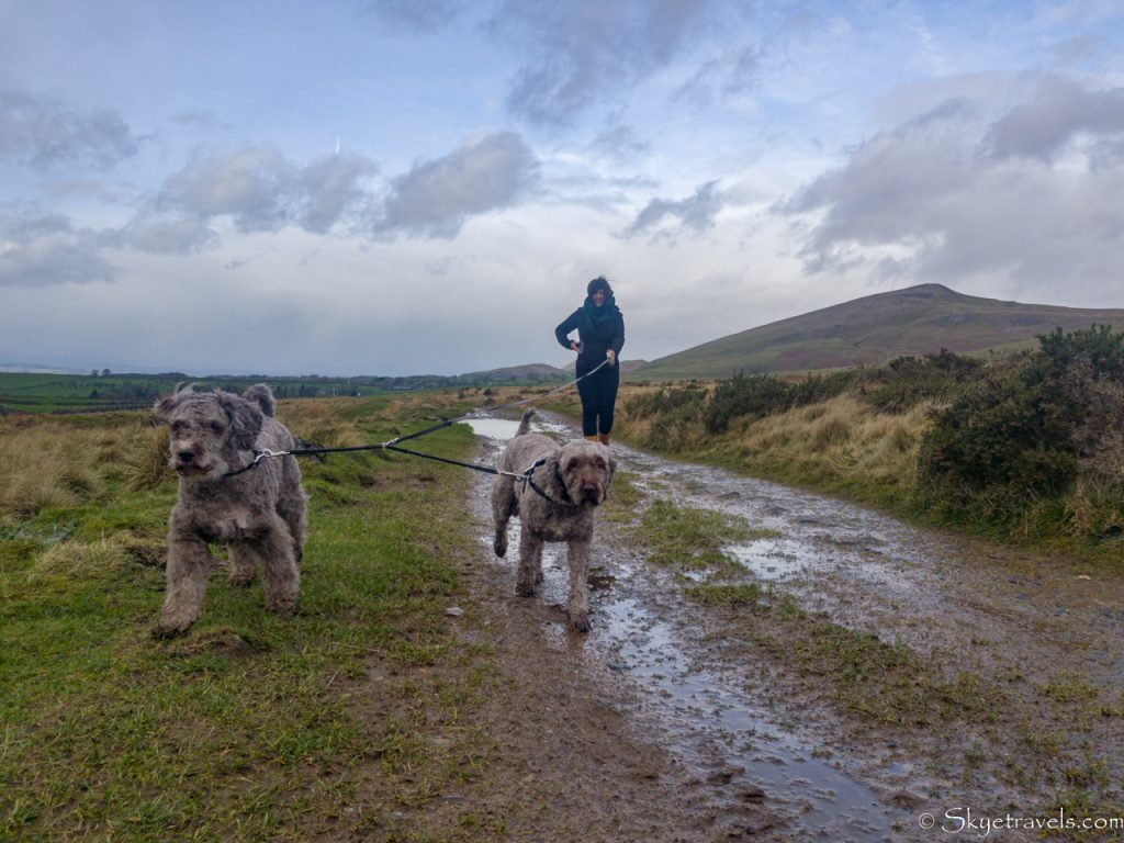 Laura Walking Dogs at House Sit in Appleby