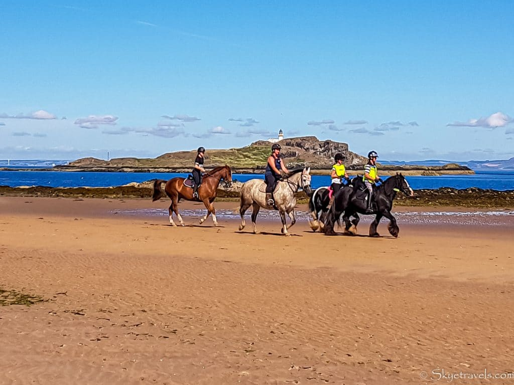 Horses on Yellowcraig Beach